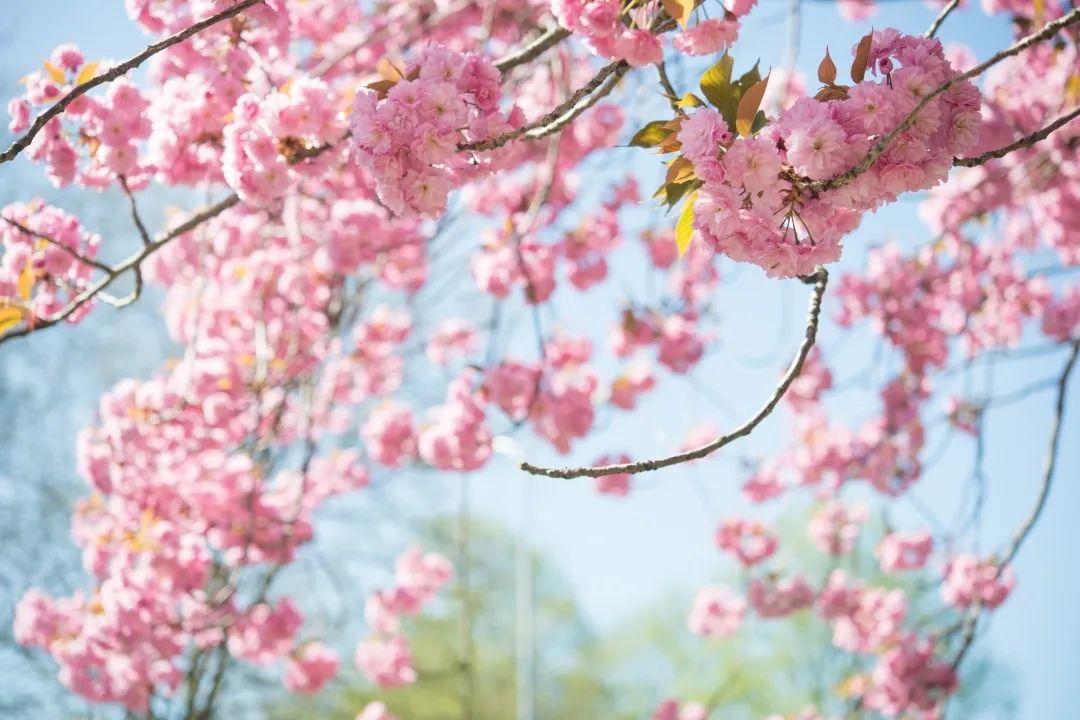 春季保健,从好好喝水说起…